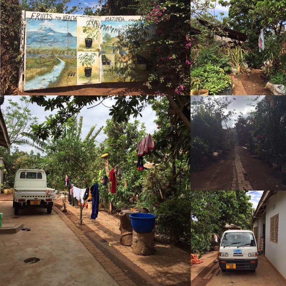 """Litt bilder fra """"hagen"""" min, og inngangsporten til huset."""